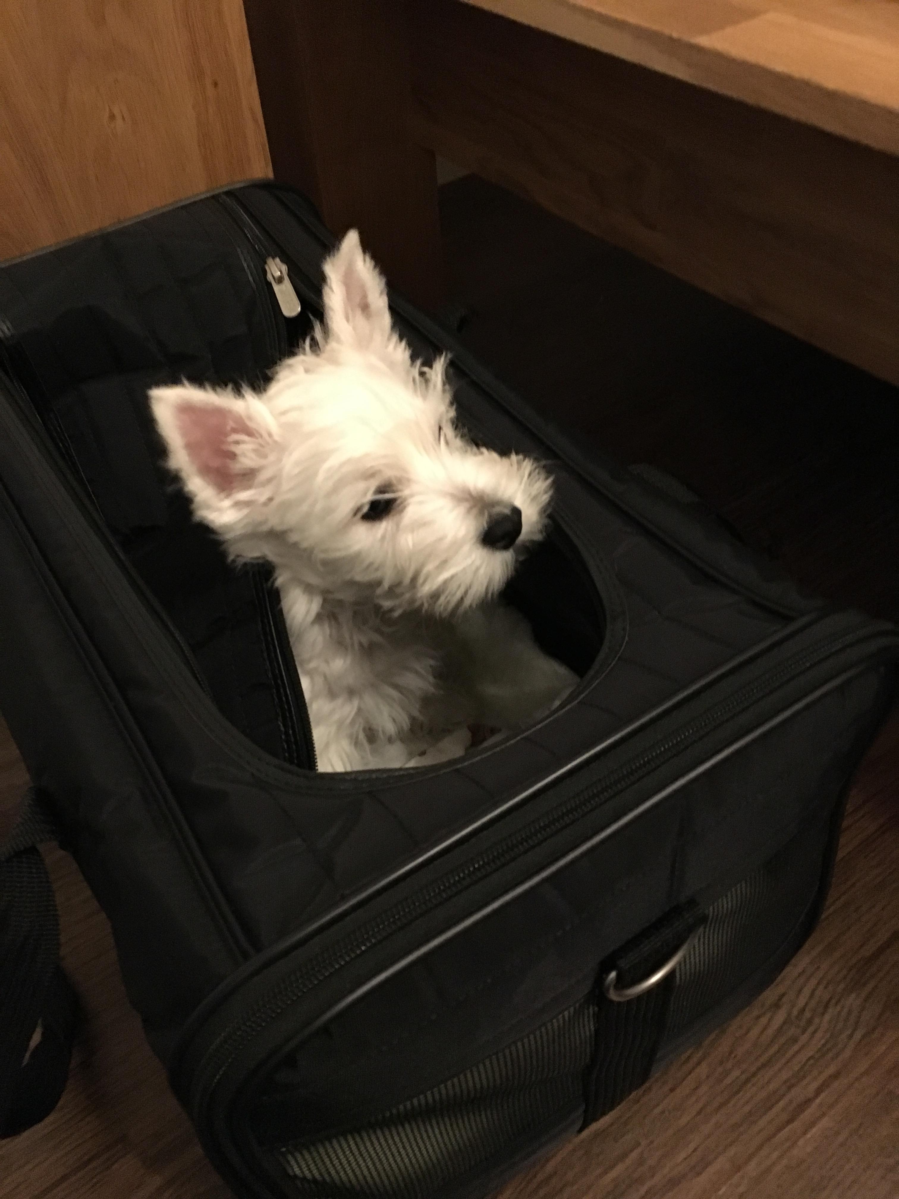 Hund in Box