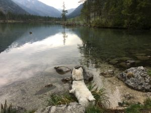 zeigt einen Hund am See