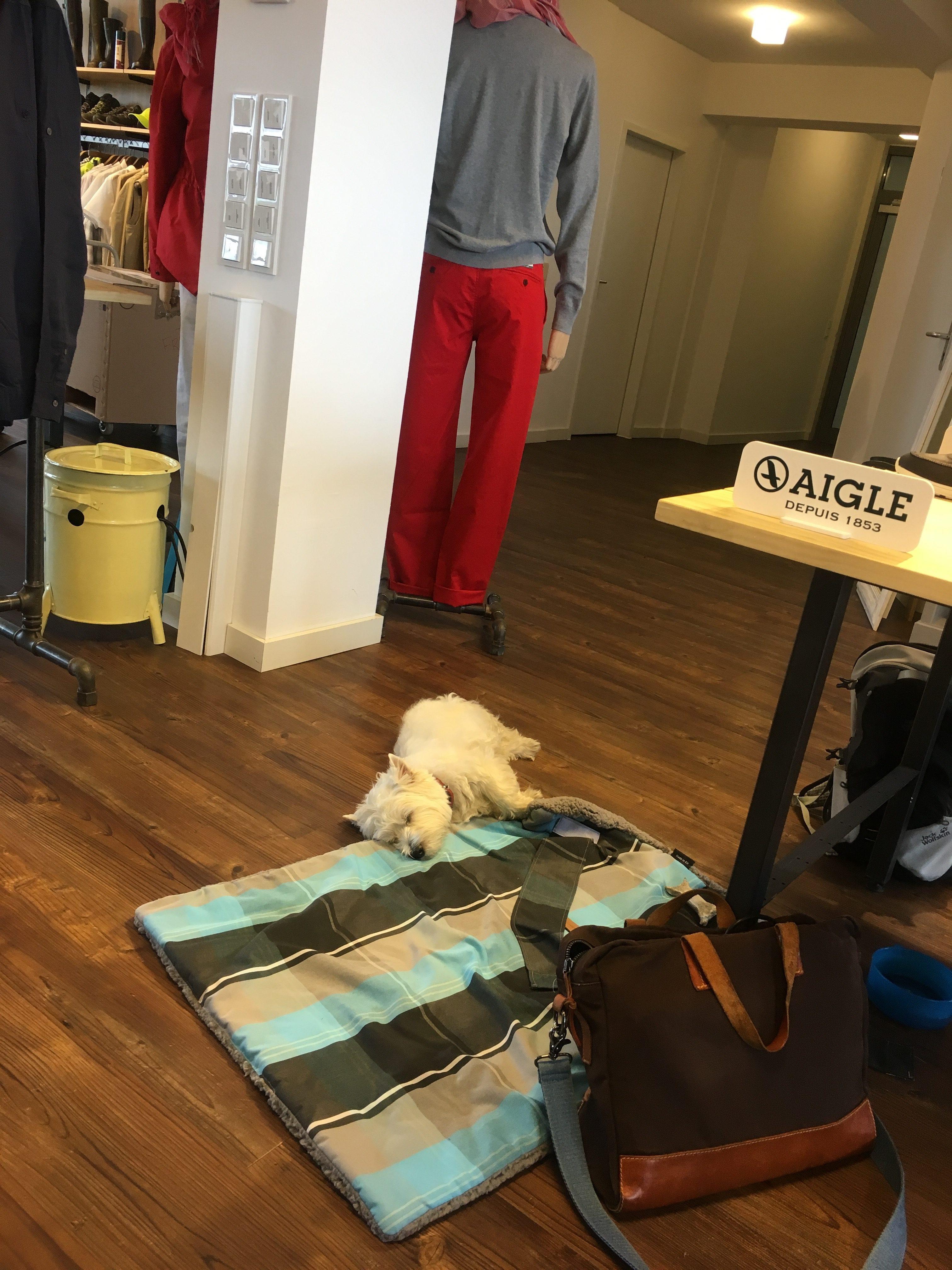 zeigt einen Hund im SHowroom