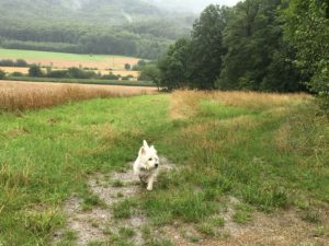 Hund am Waldrand