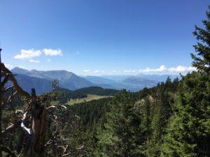Wälder mit Bergen