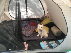 Hund im Zelt