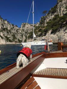 Hund auf dem Boot