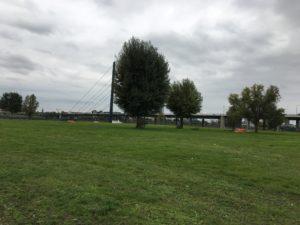 Grüne Wiese am Rheinufer