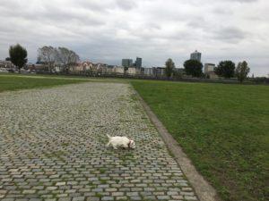 Hund am Rheinufer