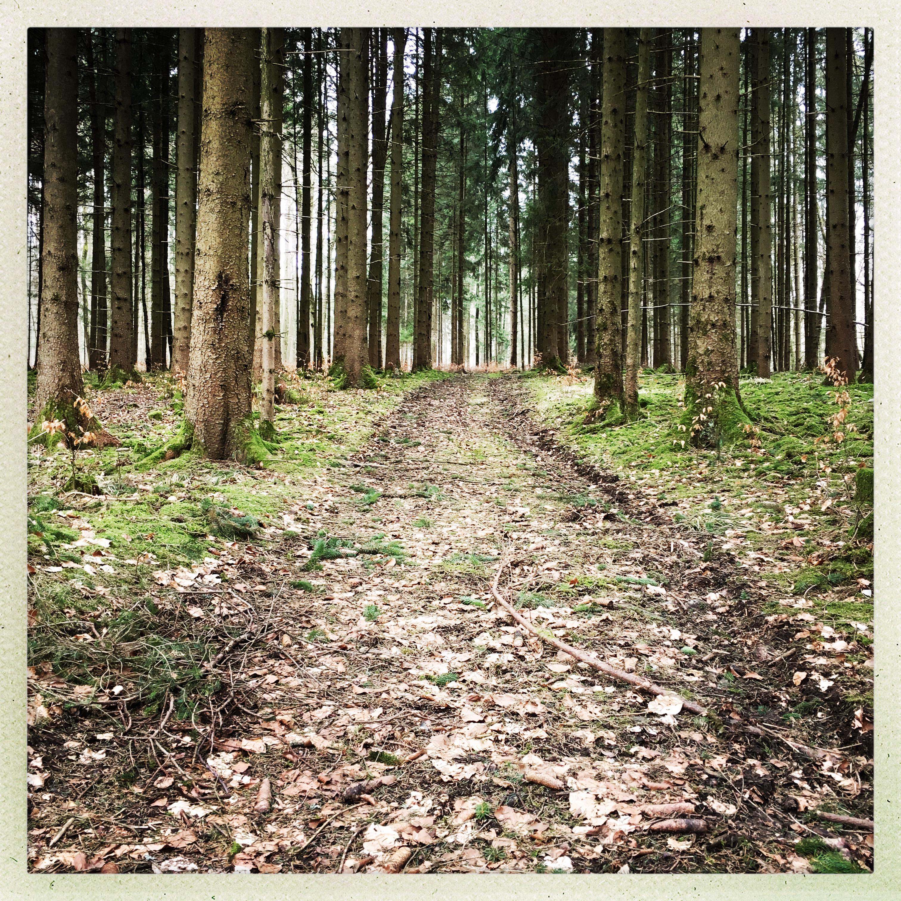 Ein Waldweg