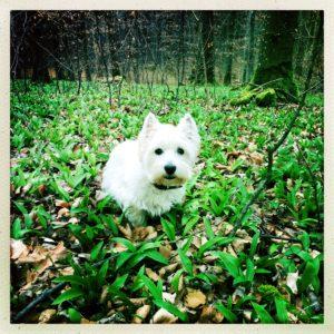 weißer Hund im grünen Wald